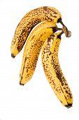 Old Bananas