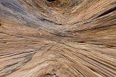 Inside Log Wood Texture