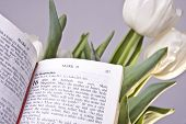 Easter Bible Verse And Tulips