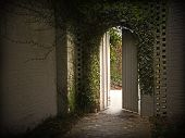 picture of english ivy  - Morning light enters through an ivy gateway - JPG