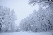 Snow Covered Trees During The First Winter Storm Of The Season.