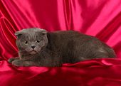 Cat on crimson cloth background