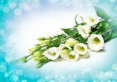 stock photo of tuberose  - delicate flower on a white background - JPG