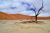 Dead tree in Deadvlei, Namibia