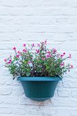 Flower in a cache-pot on a brick wall