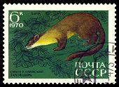 Vintage  Postage Stamp. Pine Marten.