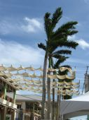 Awnings And Palms