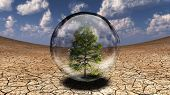 Tree inside glass bubble in desert