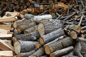 Fire wood prepared for winter
