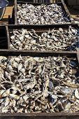Fish Drying In The Sun In Wooded Trays - Portrait