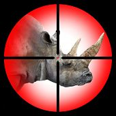 The White Rhinoceros in the Hunter's scope.