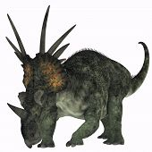 Styracosaurus On White