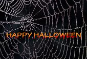 Happy Halloween - creepy and spooky for your holiday project. The words over a spider web appear to