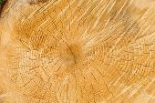 texture of wood. nature background