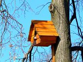 Beautiful wooden birdhouse feeder for birds hanging on a tree