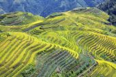Longshen Rice Fields