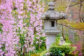 Japanese garden with stone lantern and weeping sakura