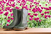 stock photo of work boots  - Rubber boots in flower garden - JPG