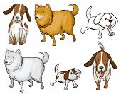 Illustration of the different specie of dogs on a white background