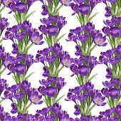 Seamless pattern from spring purple crocuses