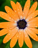 Flower With Water Drops