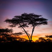 Colorful sunrise in Serengeti