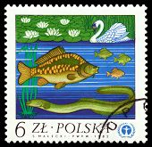 Vintage  Postage Stamp. The Eel, Carp And Swan.