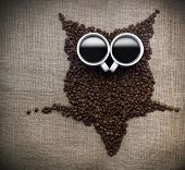 Coffee bean owl