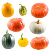 Collection Of Colorful Pumpkins