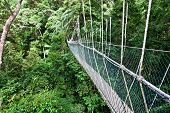 rope bridge in borneo malaysia