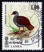 Postage Stamp Sri Lanka 1979 Sri Lanka Spurfowl, Bird