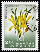 Postage Stamp Hungary 1967 Sternbergia Colchiciflora, Flowering