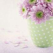 Pink Chrysanthemum Flowers3