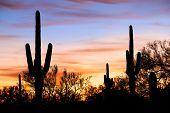 Silhouetten In Desert
