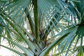 A pattern of palm tree