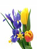 picture of easter flowers  - Photo Spring flowers taken in my studio in February 2010 - JPG