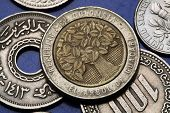 Coins of Colombia. Guacari Tree depicted in Colombian five hundred pesos coin.