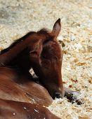 A Baby Horse