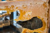 Frame With Honeycombs Full Of Honey