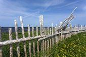 wood branch fence, Newfoundland