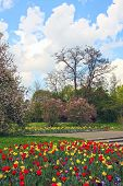Beautiful Springtime Landscape With Colorful Flowerbed