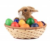 Fluffy foxy rabbit in basket with Easter eggs.