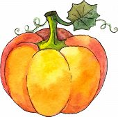 Watercolor painted vector pumpkin
