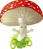 beautiful poisonous mushroom