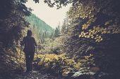 Hiker walking in a mountain forest