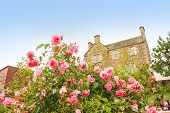 foto of climbing roses  - Old British house with window and climbing roses - JPG