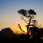 lonely tree in the mountains at sunset