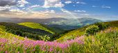 Wild Flowers On The Mountain Top At Sunrise