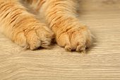 Paws of red cat on wooden floor background