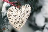 Covered with snow and wicker heart branch of spruce, outdoors